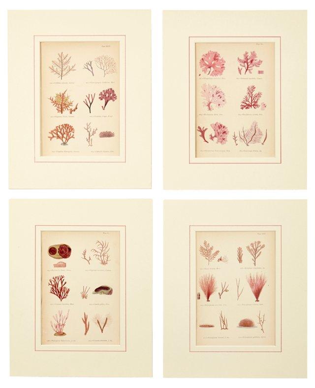 Seaweed Prints, Set of 4, V