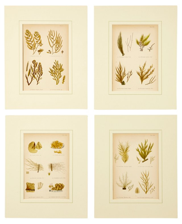 Seaweed Prints, Set of 4, X
