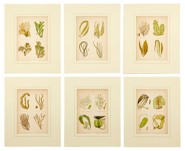 Seaweed Prints, Set of 6, III