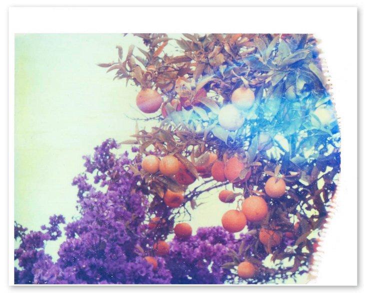 purples + oranges