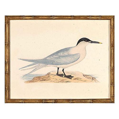Sea Bird II