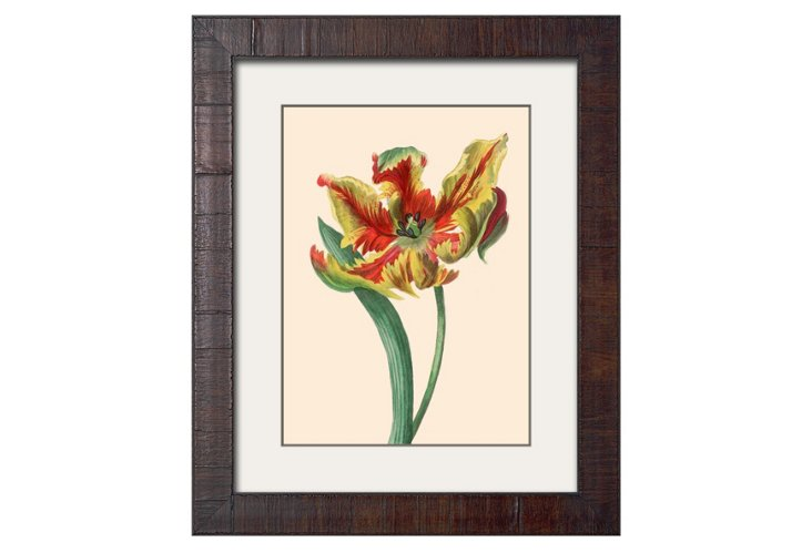 Outrageously Beautiful Tulips B