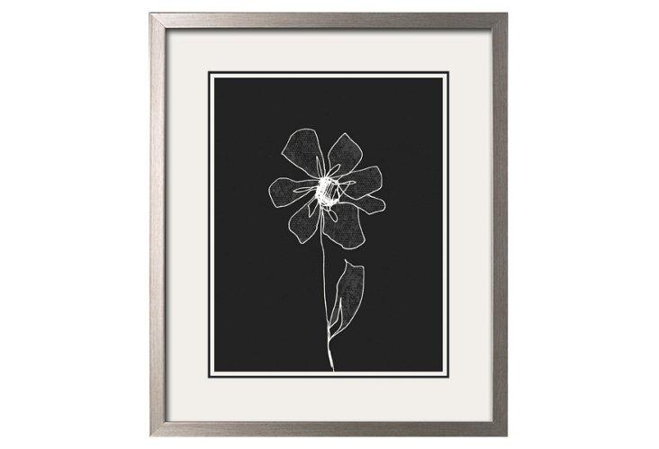 Delicate Flower on Black Ground I