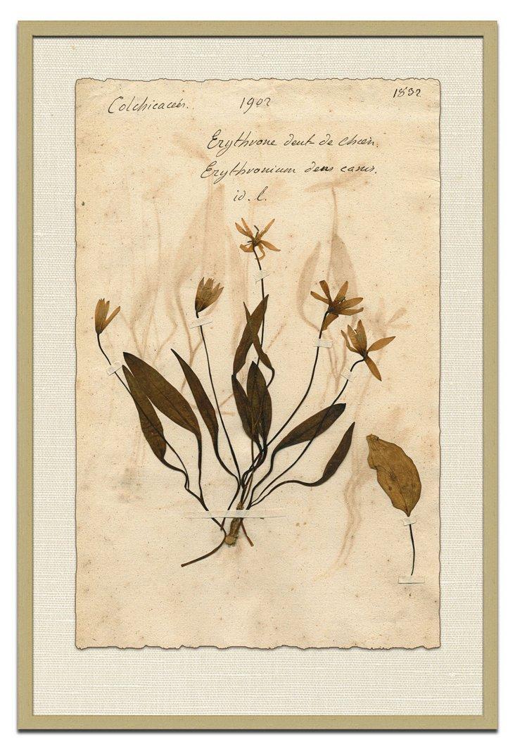 Vintage Press Flora I