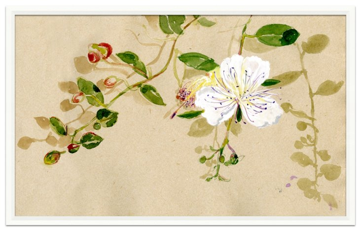 Isabelle de Borchgrave, Flower, Lefkada