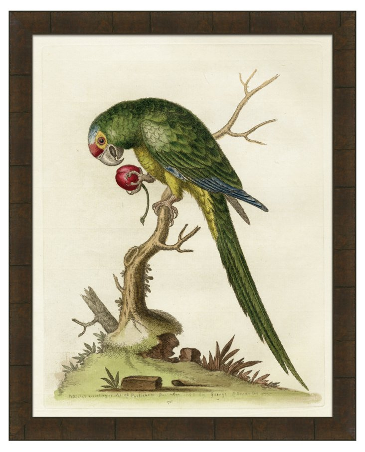 August, George Edwards Parrot III DNU