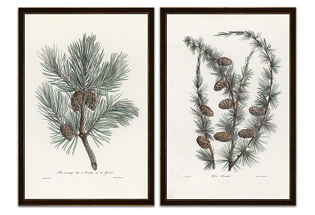 Pine Tree with Pinecones