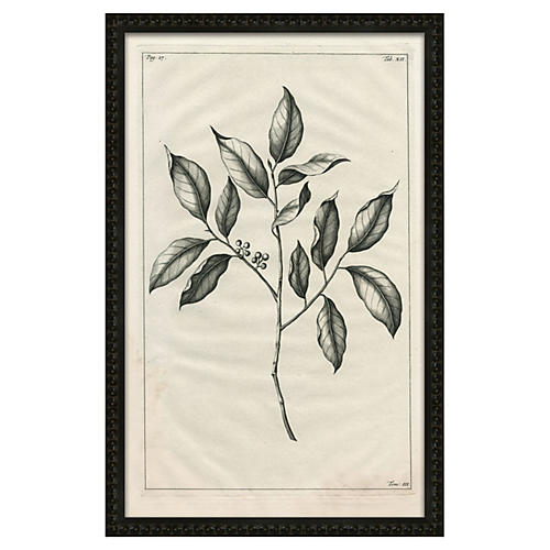 Botanical Black & White
