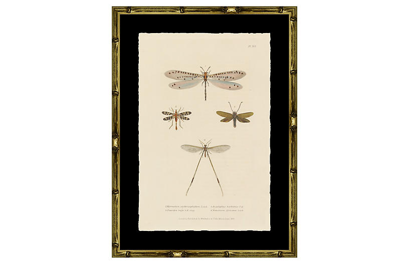 Dragonflies for Luck II