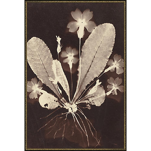 Soicher Marin, Botanicals I