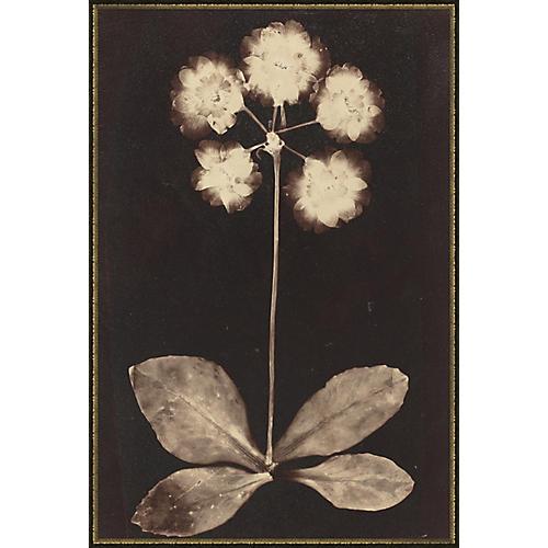 Botanicals II, Soicher Marin