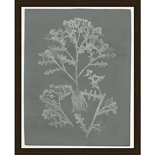 Soicher Marin, Botanical Pressings II