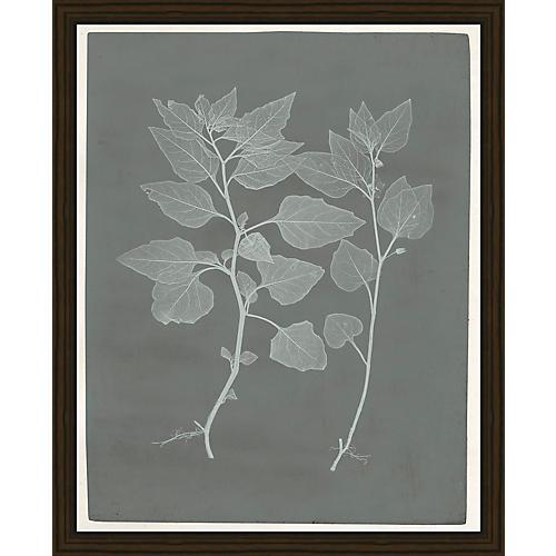 Soicher Marin, Botanical Pressings III