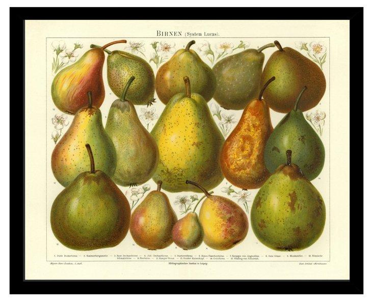 Birnen (Pears)