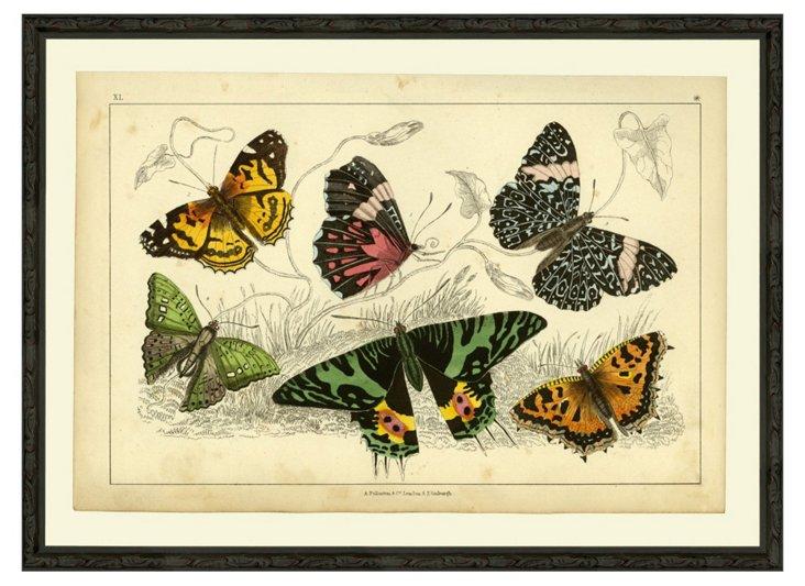 Multi-Butterflies Green, 1850
