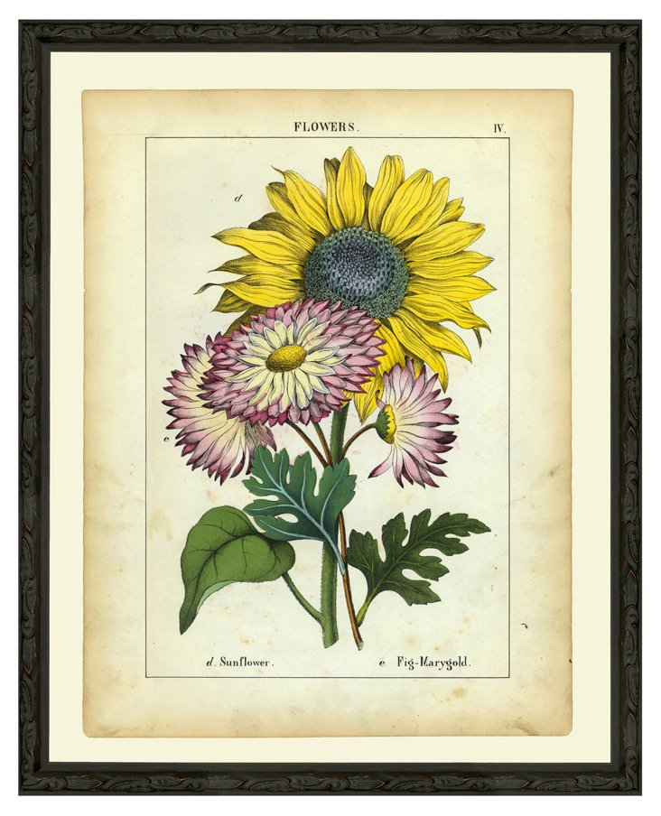 Sunflower and Fig Marygolds, 1863