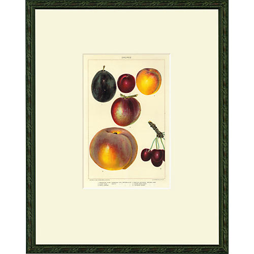 Stone Fruit, Drupes, 1902