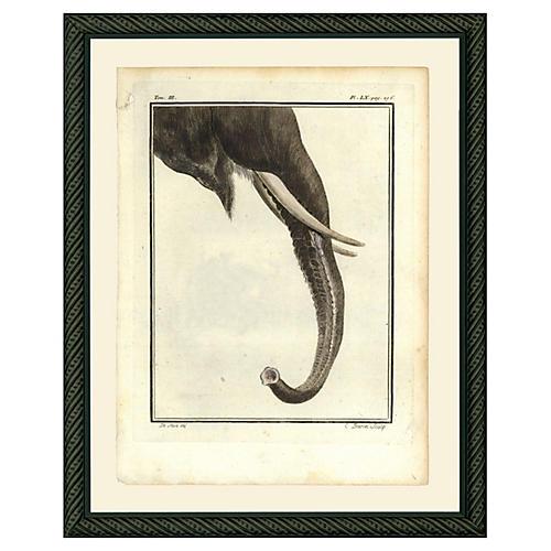 Elephant Trunk, 1780s