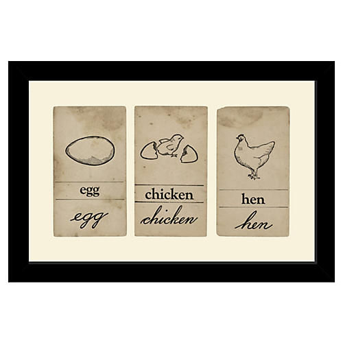 Egg, Hen, Chicken