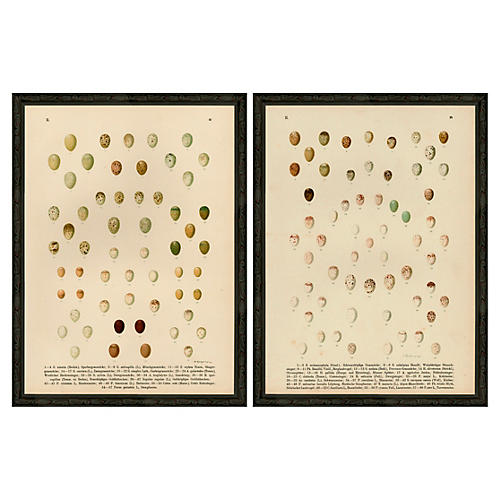 Multi-Eggs Diptych I