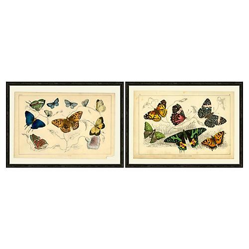 Multi Butterflies Diptych I