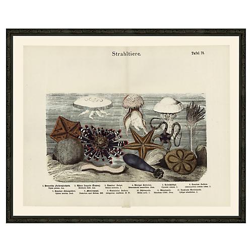 Seascape Starfish, Jellyfish 78, 1890