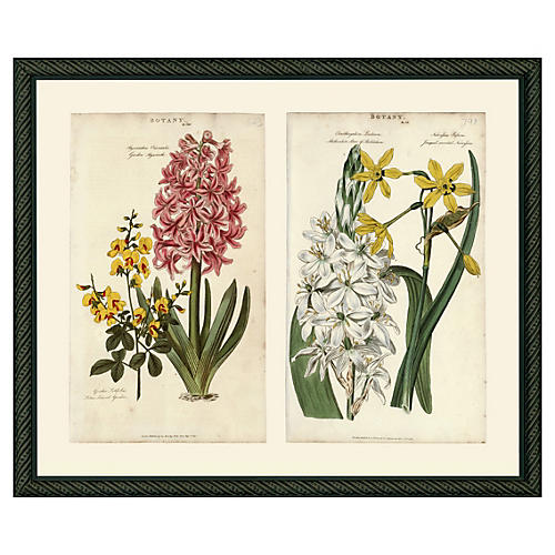 Pink Hyacinth & Yellow Narcissus, 1810