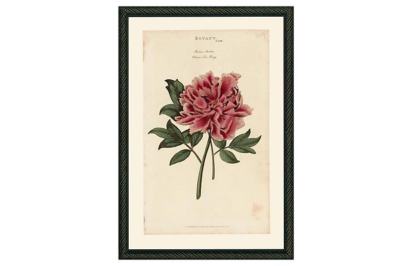 Pink Peony 43 - 1810
