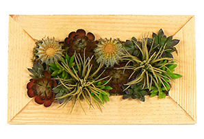 """20"""" Cacti & Succulents in Wood Planter"""