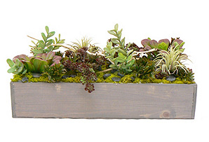 """17"""" Sedum & Succulents in Planter, Faux"""