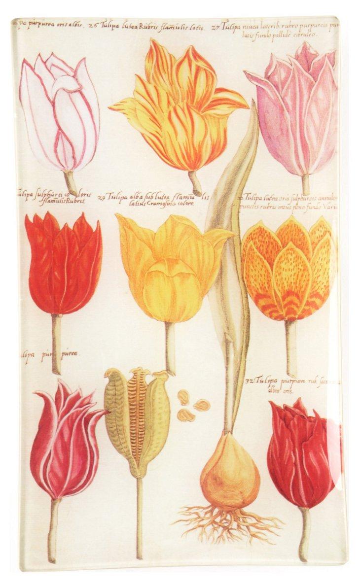 Tulip Study Tray