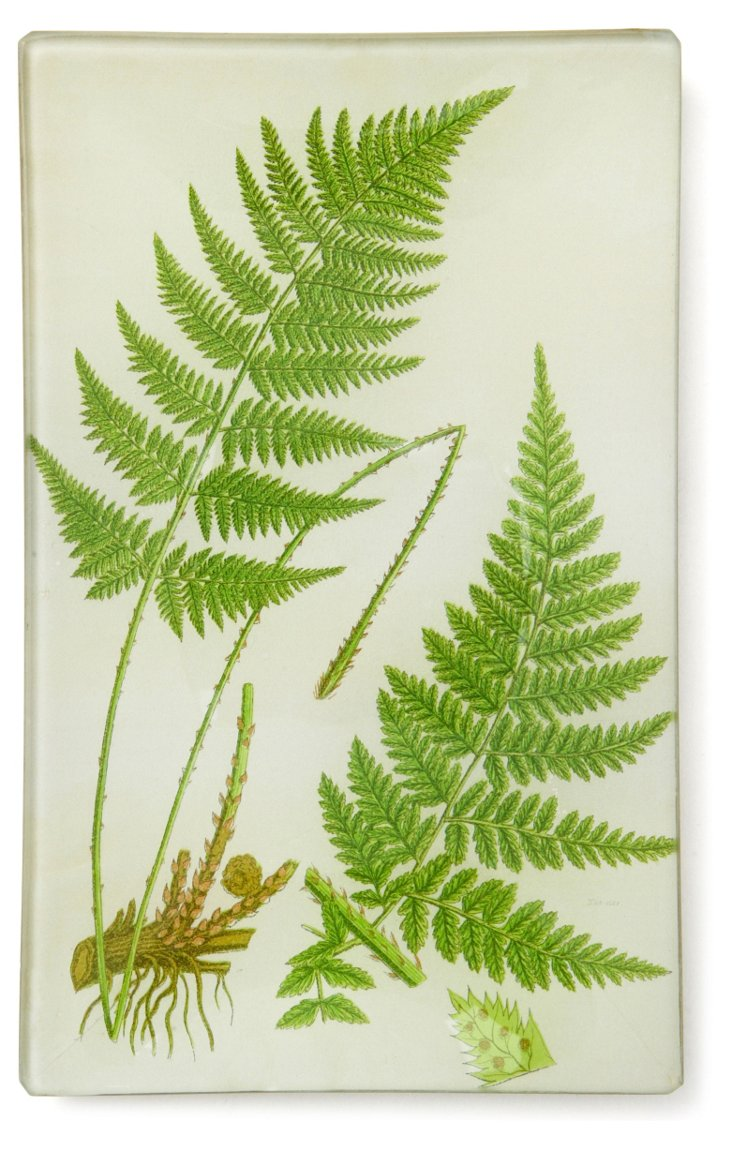 5x8 Narrow Toothed Fern Tray