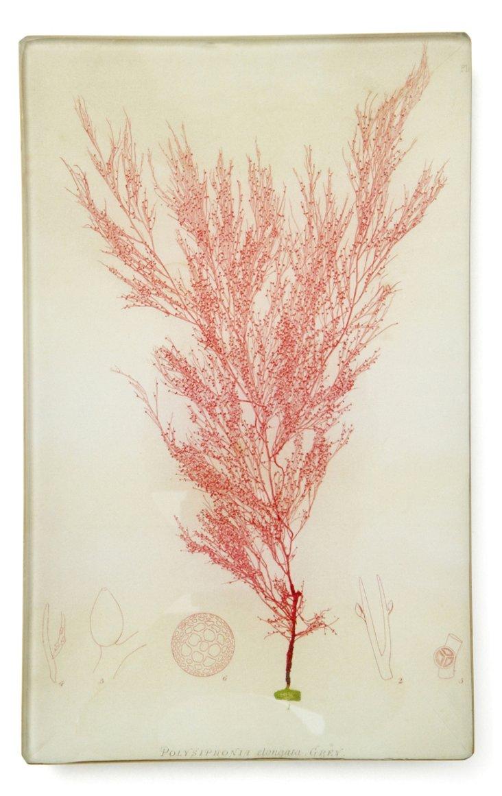 "8"" Hand-Decoupaged Pink Seaweed Tray I"