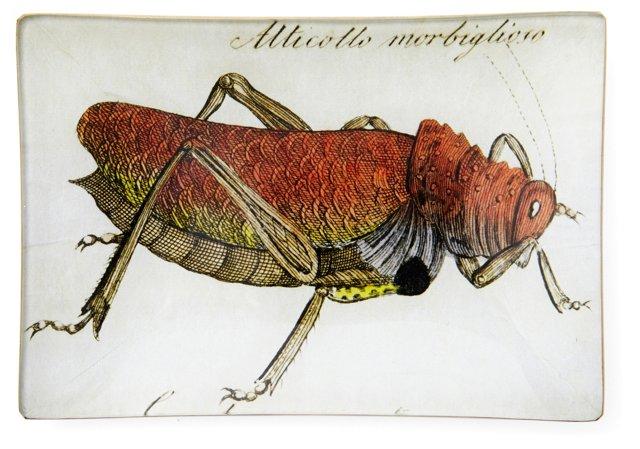 Grasshopper Tray