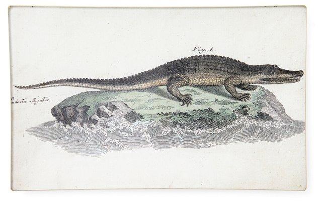 Alligator Tray