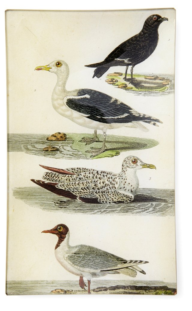 Shorebird Study Tray