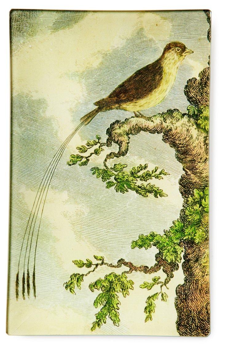 5x8 Bird w/ Long Tail Tray