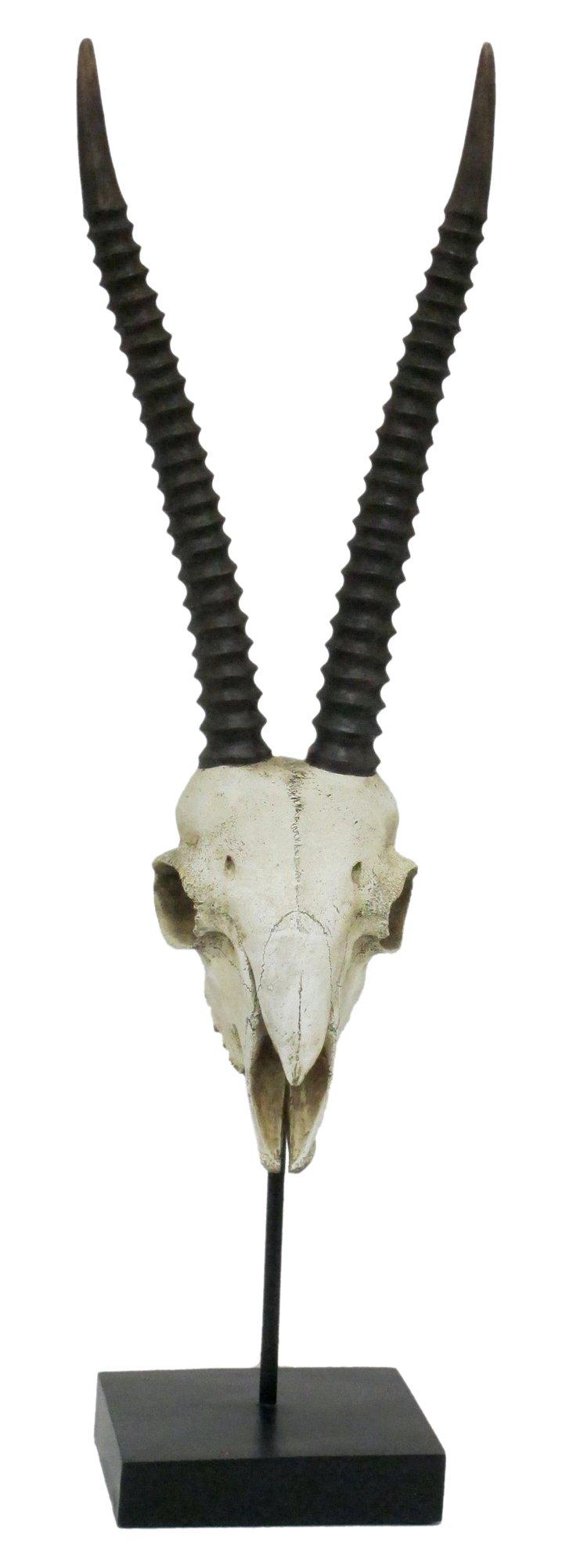 Antelope Skull Tabletop