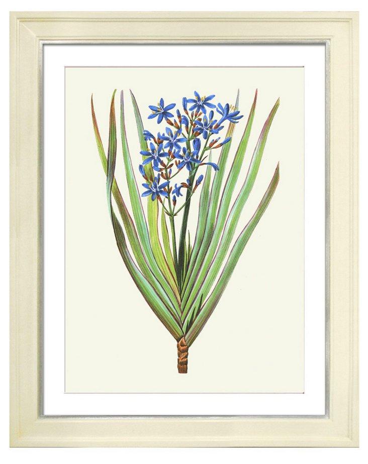 Pancrace Bessa, Flowers II