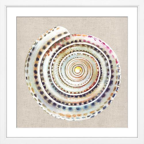 Snail Shell, Snail Shell