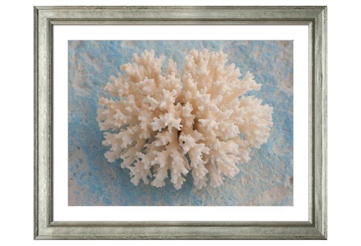 Ben Wood, White Coral