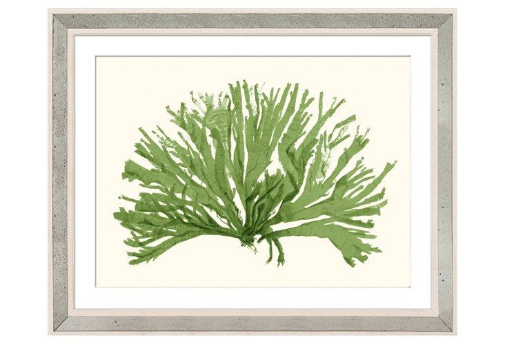 Miranda Baker, Green Coral II