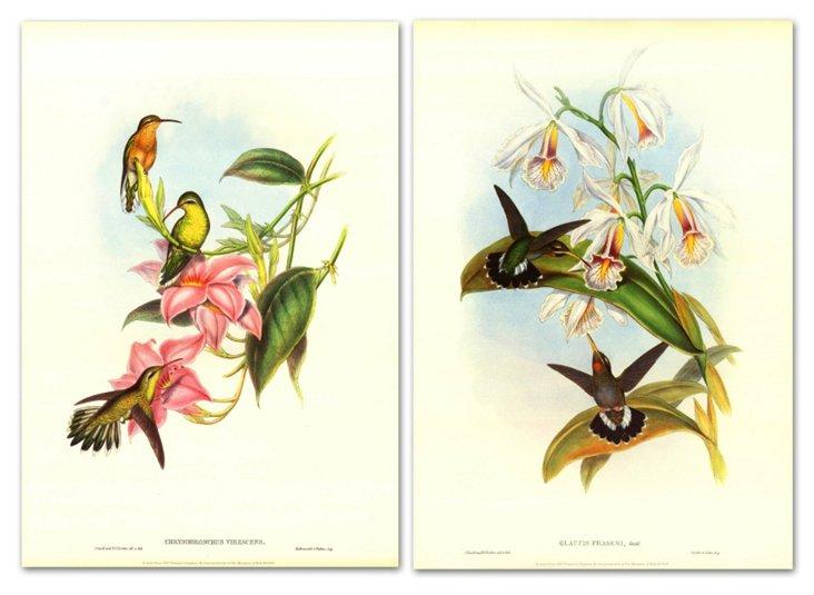 John Gould, Hummingbirds I Diptych
