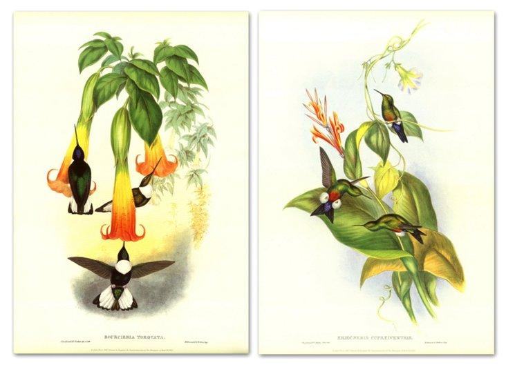 John Gould, Hummingbirds III, Set of Two