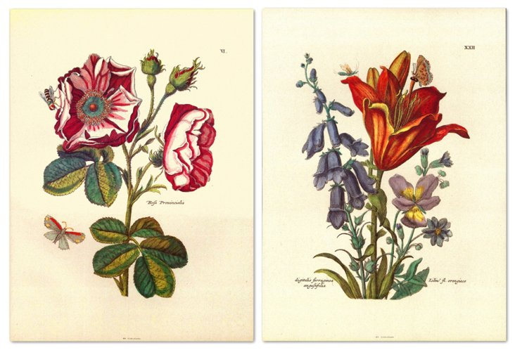 Nicolas Robert, Floral I Diptych