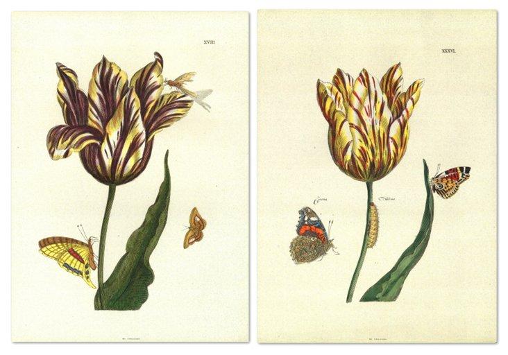 Nicolas Robert, Floral III, Set of Two