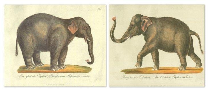 Karl Brodtmann, Elephants