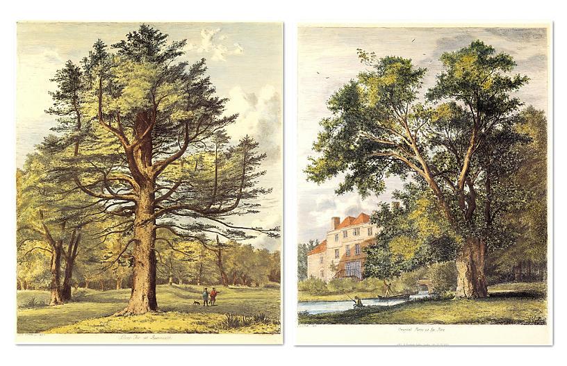 Jacob G. Strutt - Trees II - Set of Two - William Stafford