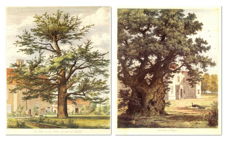 Jacob G. Strutt, Trees III, Set of Two