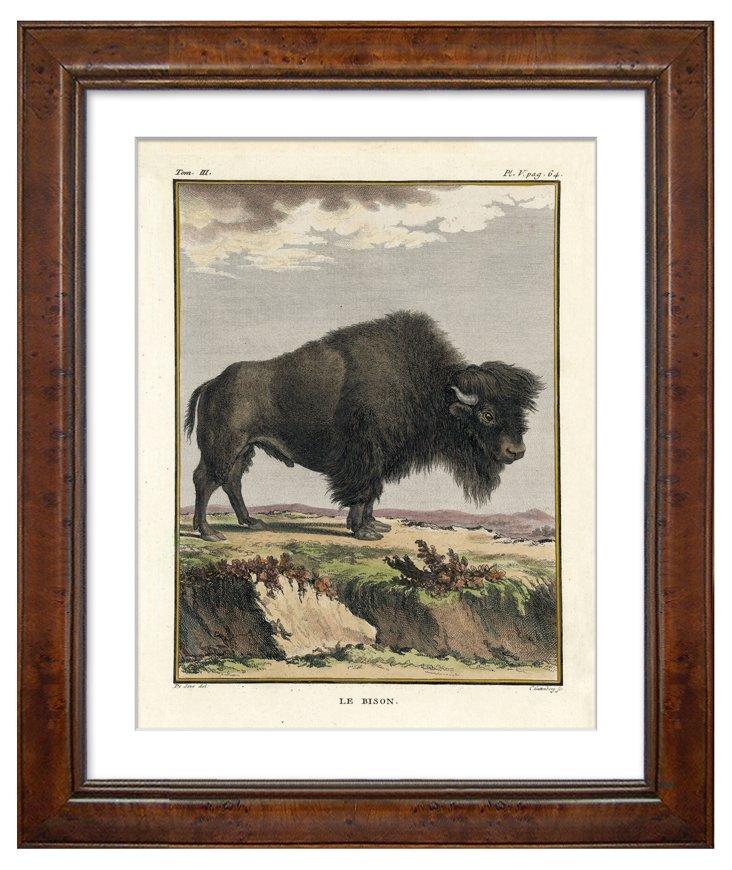 Georges-Louis Leclerc, Bison